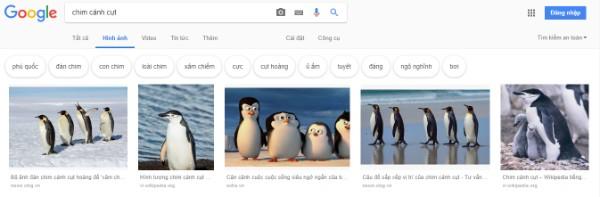 check seo hình ảnh trên google